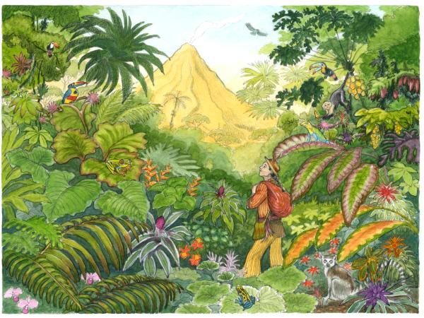 Volcano Book Cover